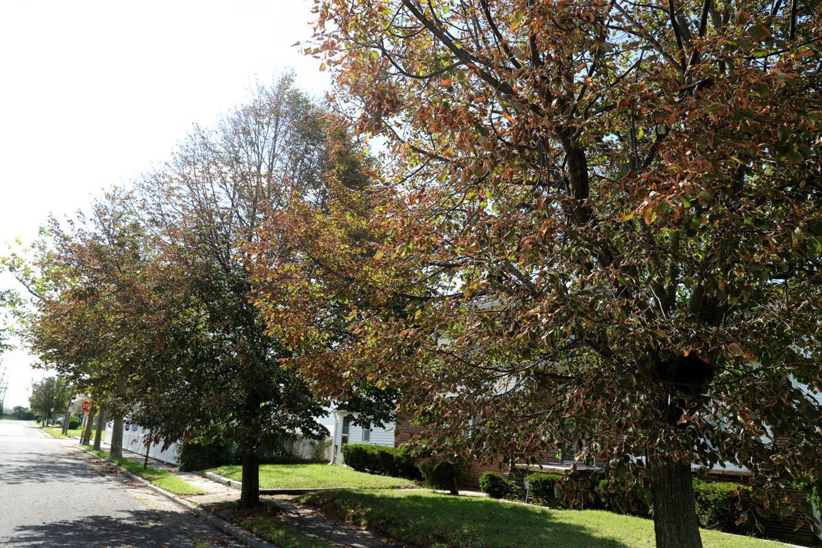 082020_nws_trees 532
