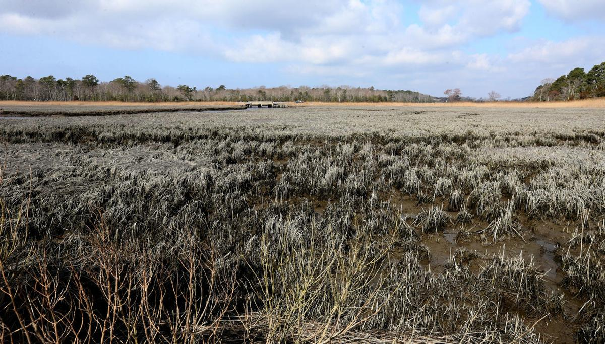 Marshes Color