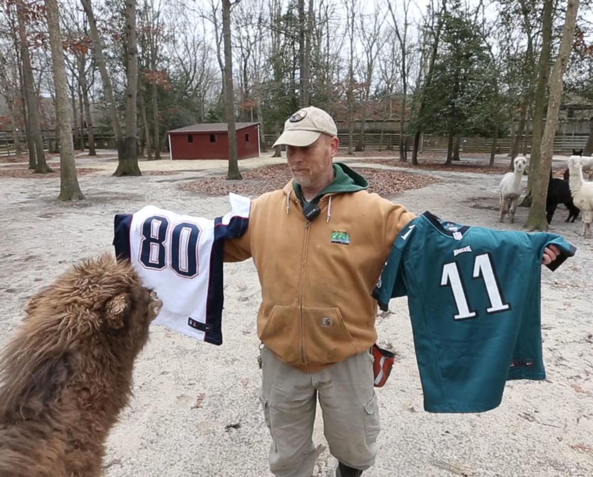 Zoo Camel Super Bowl Pick