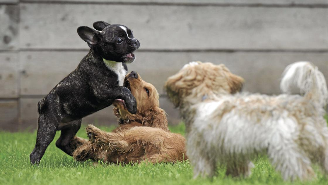 Etiquette for your next trip to the dog park