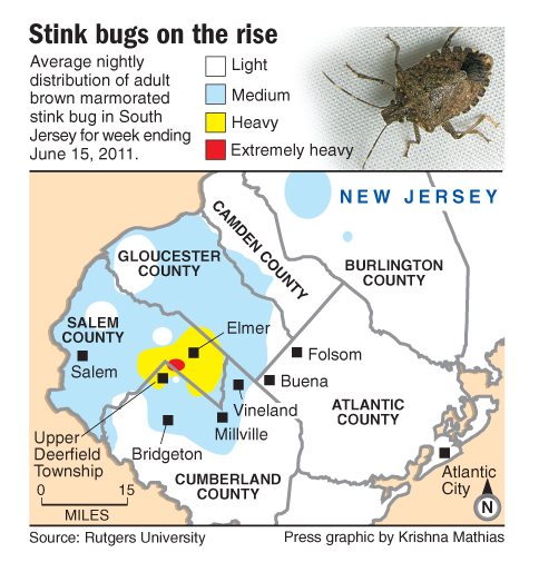 NJ stink bug map