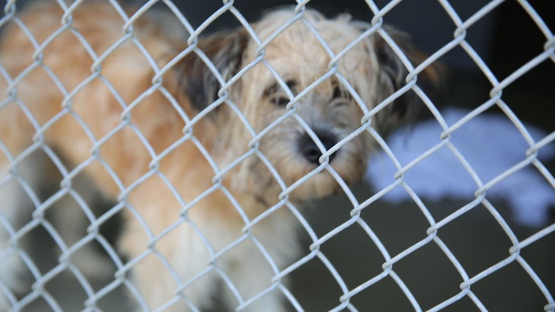 Atlantic County Animal Shelter to waive fees to adopt dogs next week