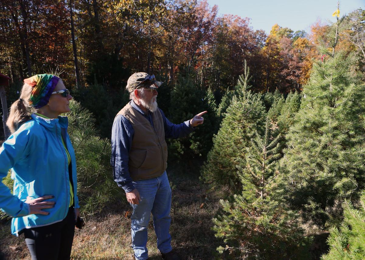 6c9917d64e6 South Jersey Christmas tree farms prepare for holiday rush