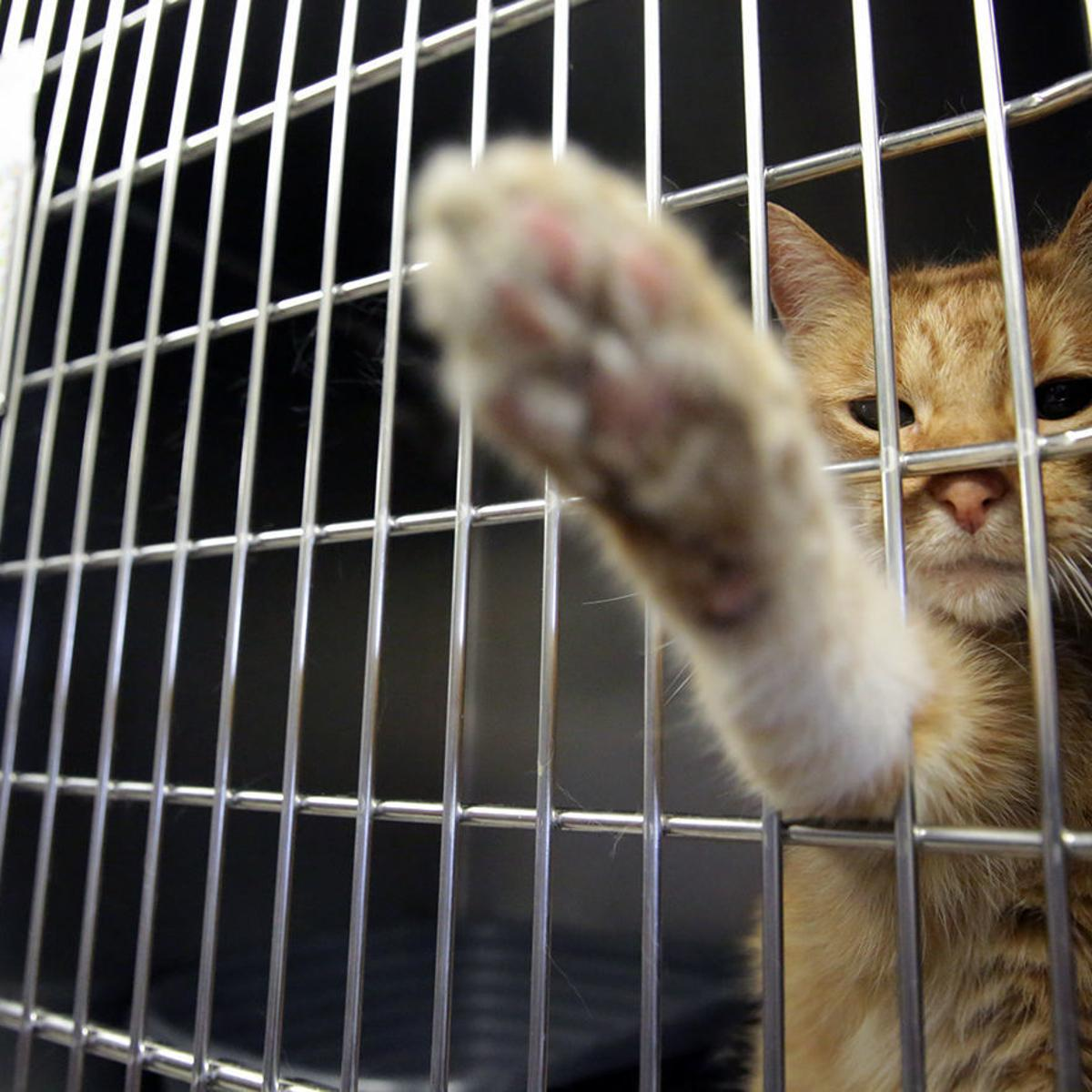 Atlantic County animal shelter to hold rabies vaccination