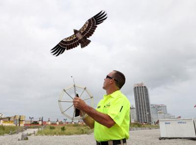 Eagle kite is gulls' worst nightmare on Atlantic City beach