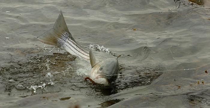 fish advisories107947459.jpg