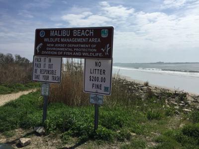 Dog Beach Malibu Beach (1).JPG