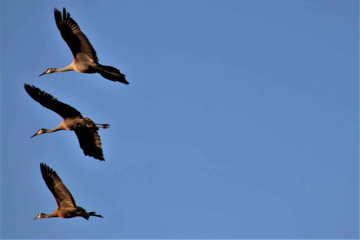 birds_IMG_5039