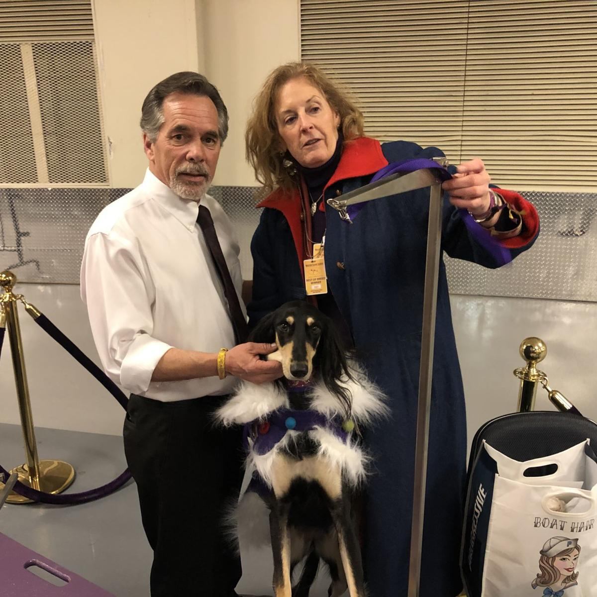Cape May Saluki readies for Westminster