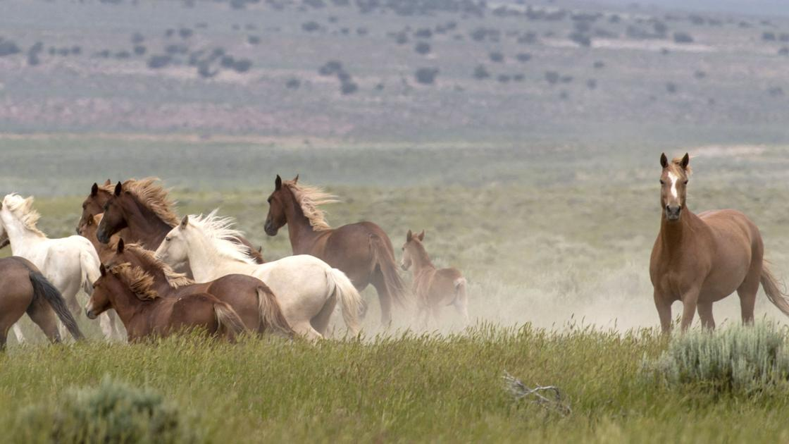 Wild horses have long kicked up controversy. Usual foes say they have solution.