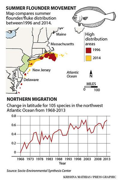 Summer flounder migration map