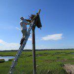 Conserve Wildlife Foundation of NJ Volunteer Matt Tribulski at nest site
