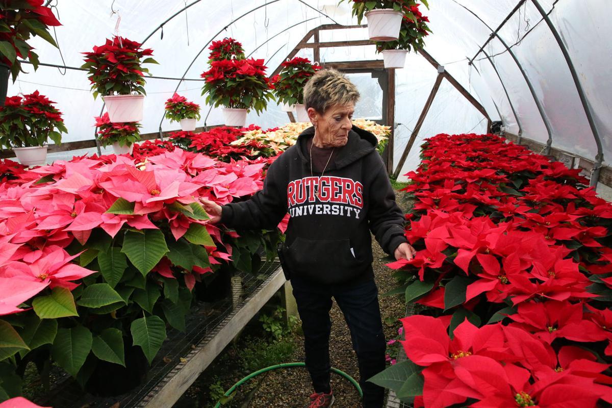 NJ Greenhouses