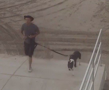 Wildwood Police attempting to identify dog owner