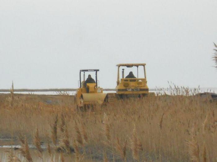 Delaware Bay Sandy