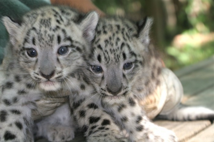 Cape May County Zoo Contest Challenges Children To Name Its Baby