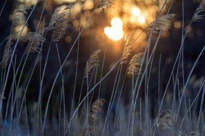 Sunrise Sunny Mays Landing