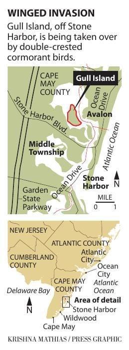 Gull island cormorant Stone Harbor map