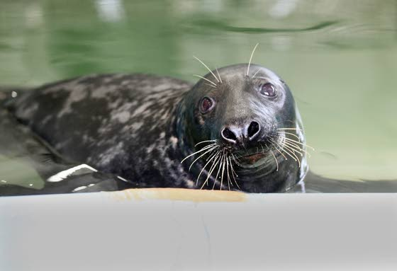 At The Shore Today: Learn about seals at Marine Mammal Stranding Center