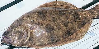 flounder icon