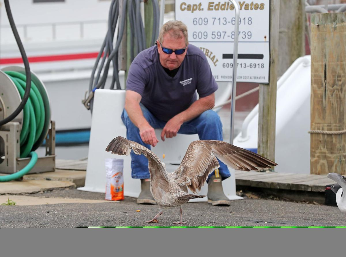 Capt. Yates feeds Seagulls