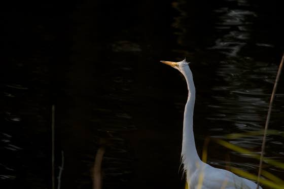 Nature photographs make way to Hammonton gallery