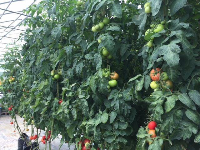 Bridgeton gets $100,000 grant for food tech hub   Local News