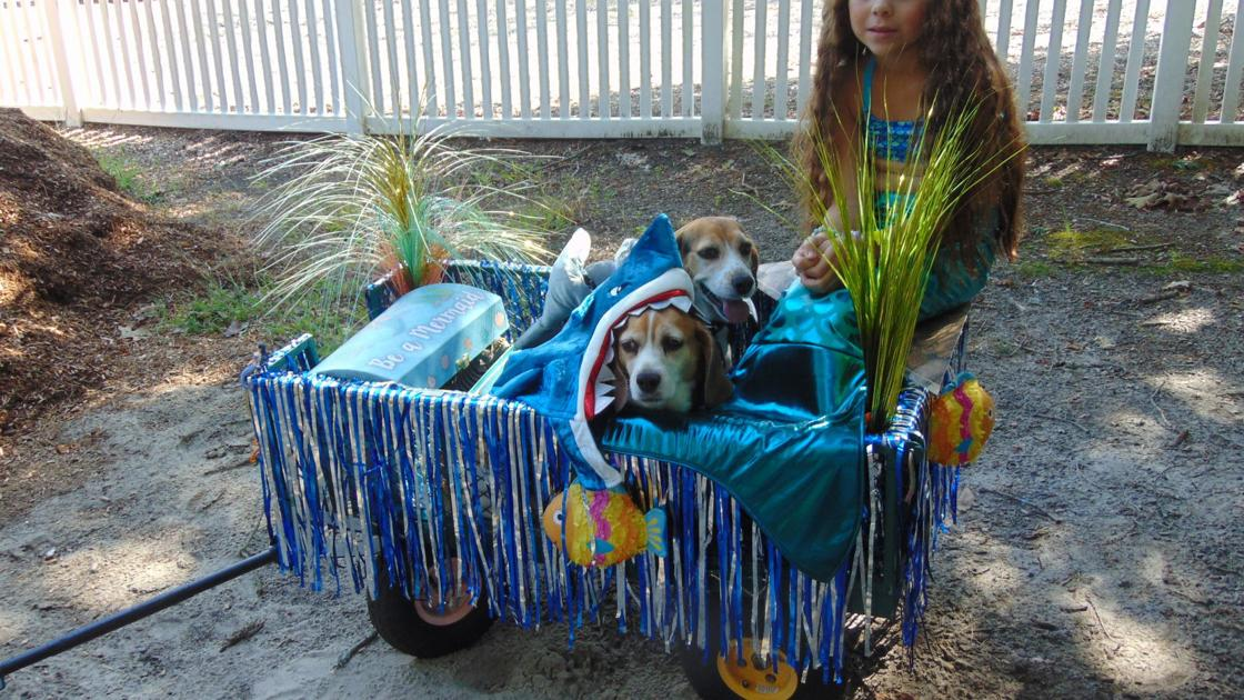Penny Angel Beagle Rescue hosts 19th annual Beagle Barbecue