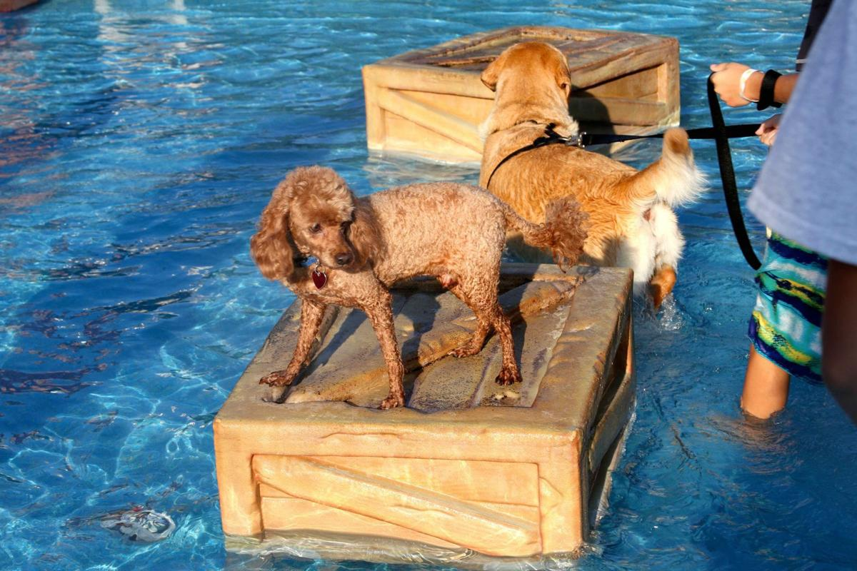 dog_event