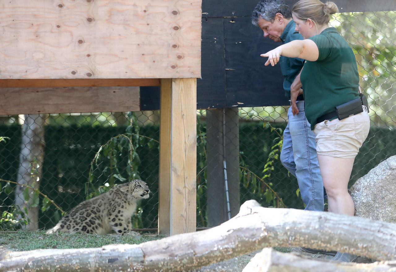 Snow leopard cub dies at Cape May County Zoo