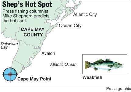 Shep on fishing 530 pound thresher shark caught 25 miles for Night fishing spots near me