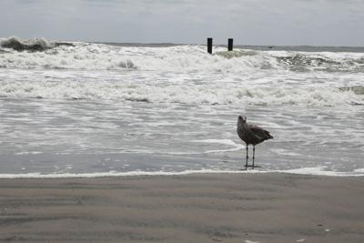 Atlantic City rip currents