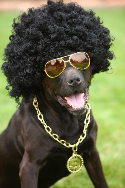 dog with wig