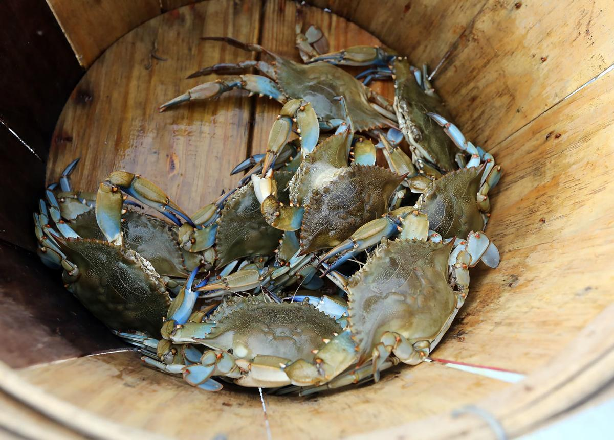 Crabbing at Beaver Dam