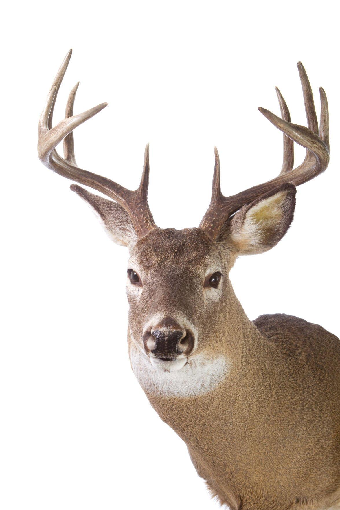 Deer deaths
