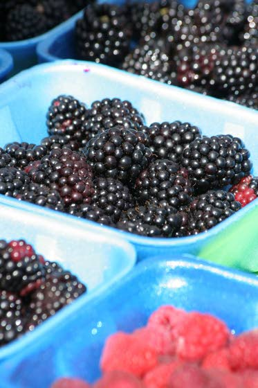 Health briefs: The benefits of blackberries and robotic jogging companion