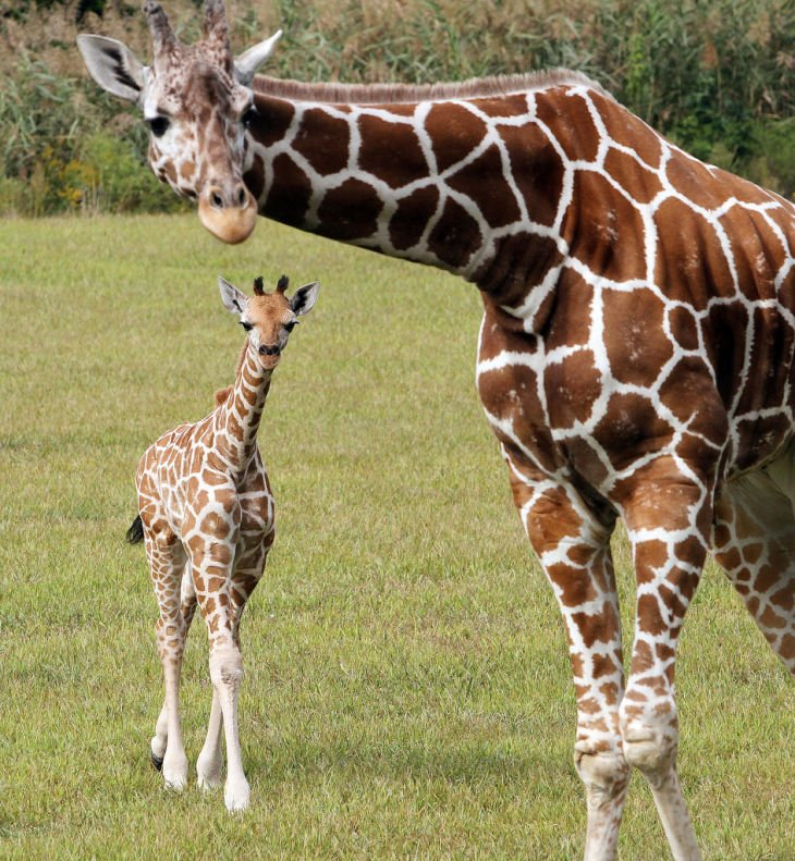New arrivals: Cape May County Zoo shows off baby giraffe ...