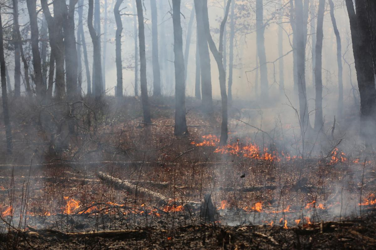 Even a record wet year in Jersey won't extinguish the forest fire threat
