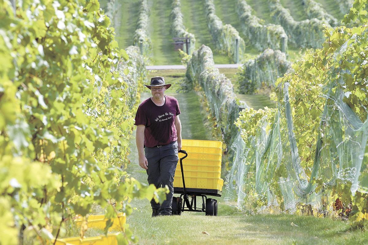 Vineyard-Harvest-Wagon.jpg