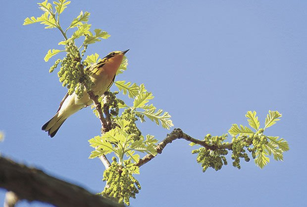 New study finds rapid decline among common and threatened birds