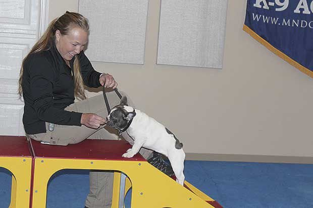 Dogs Receive Elite Training At Ivy League Boarding School News