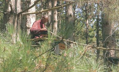 Music in the trees: performing from tree stands