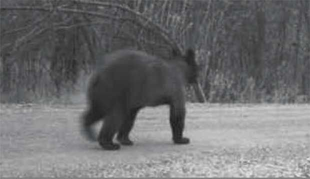 Uptick in bear sightings