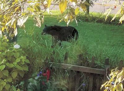 Be aware of bears: DNR lists tips for avoiding conflicts