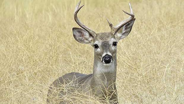 Warm, windy temps make slow start for Minnesota deer season
