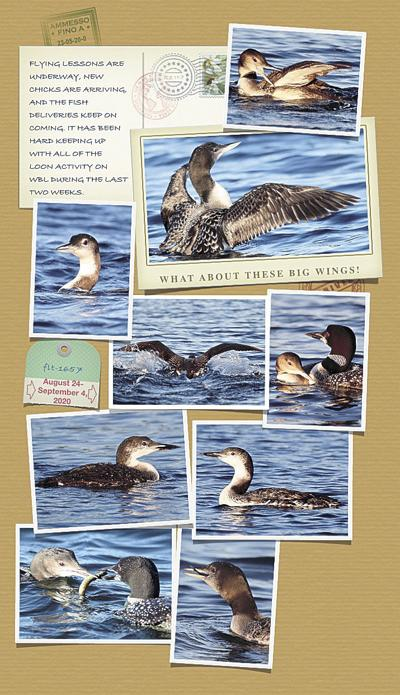 Loon Chronicles V: What about these big wings