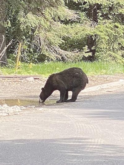 Manitou Island bear sighting