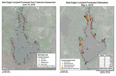 Bald Eagle Lake gets clean bill of health for milfoil