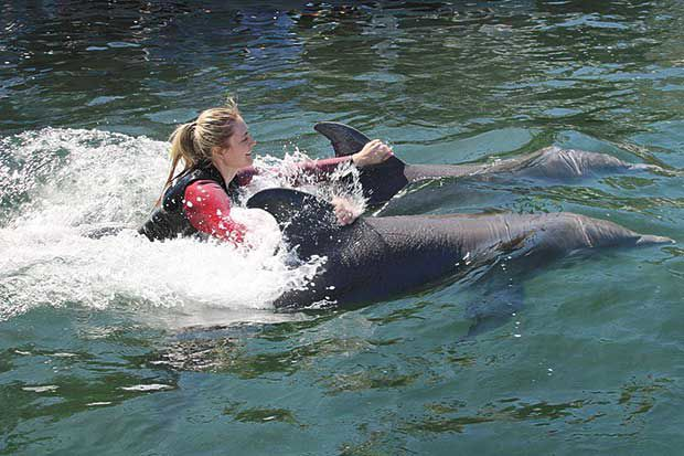 Former Lino Lakes ambassador interns with dolphins