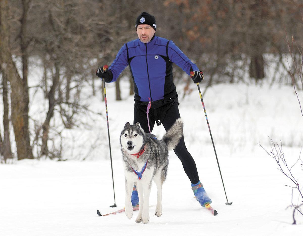 Dog-Skijoring2.jpg